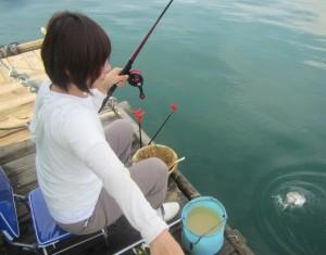 女性も楽しいチヌ釣り。