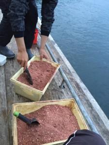 ダンゴ用の桶は丸型と四角型好きな方貸してくれます。