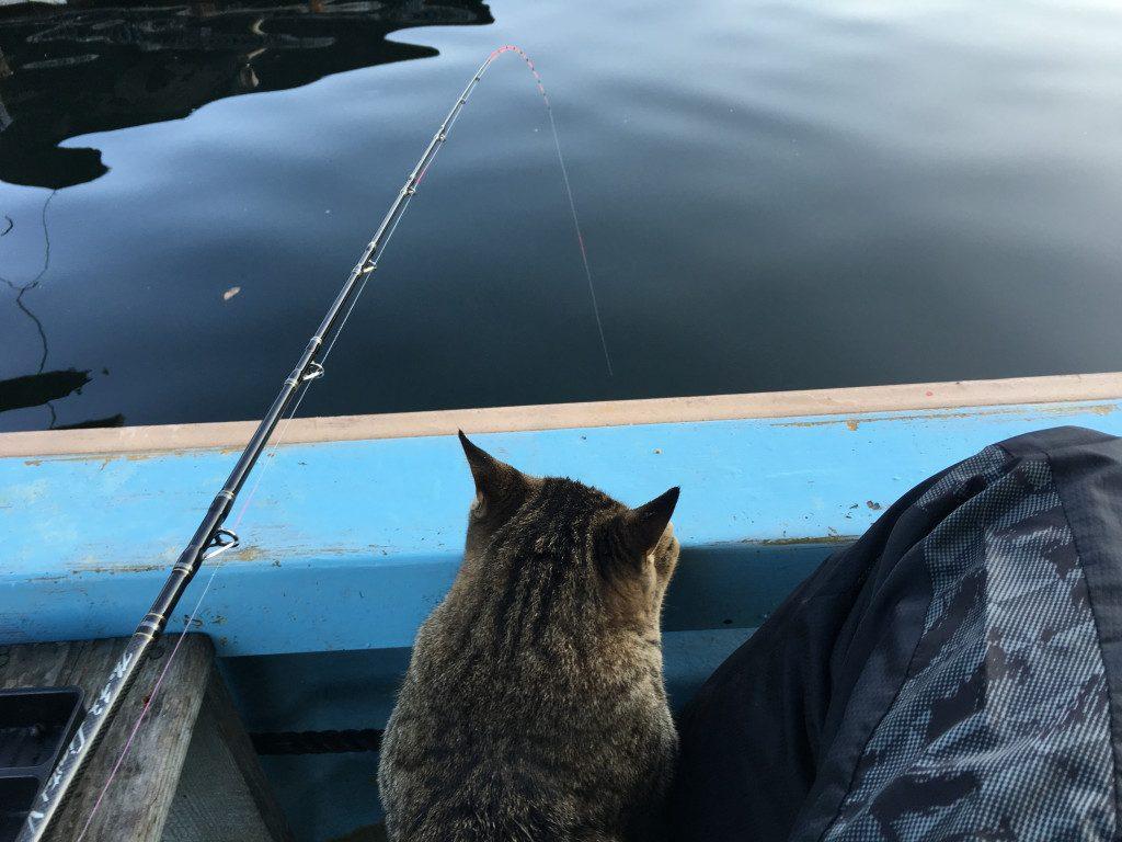穂先を僕と一緒に眺めるネコさん。無理やり抱いてるわけではないですよ