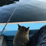 【釣れすぎ】ネコと一緒にチヌ釣り良型54枚【ちょい飽きた】